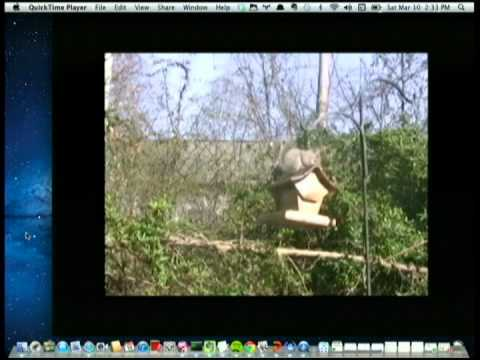 Image from Militarizing Your Backyard with Python: Computer Vision and the Squirrel Hordes