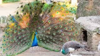 Birds | Learn English | Interesting English