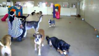 Dog Boarding Kennels – Colorado Springs
