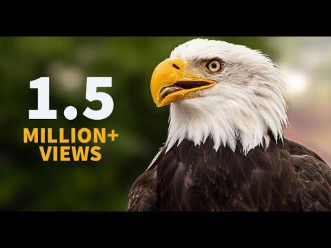TPB - Eagle Survival Story
