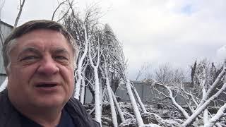 Крупномеры можно высаживать даже зимой