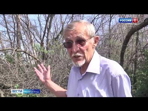 Управлением Россельхознадзора на территории Волгоградской области выявлены лесные насаждения, пораженные карантинным вредителем