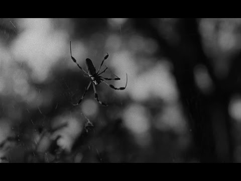 Spider Baby (1967)- Blu-Ray 720p- Legendado
