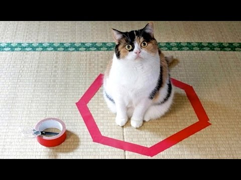 sitting - Every cat lover knows that you can't keep a box in your house if you don't want to find a kitten sitting in it, but did you know that cats are also obsessed with circles? Reddit user admancb...