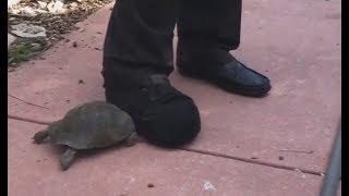 Video Tortoise vs. Shoe MP3, 3GP, MP4, WEBM, AVI, FLV Desember 2018