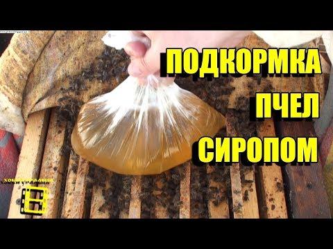 Сахарный сироп для весенней подкормки пчел
