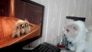 Video My cat watching Lucas the Spider move MP3, 3GP, MP4, WEBM, AVI, FLV Februari 2018