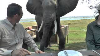 As we were eating brunch an elephant was eating pods off of the ground and as it approached we were told to stay very still,...