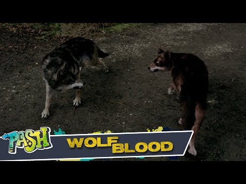 Wolfblood: Irresistible T1 E13 | PASH