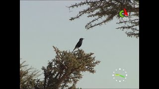 Tindouf: Conservation de la diversité du parc culturel