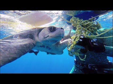 Θαλάσσια χελώνα ευχαριστεί τον δύτη που την έσωσε