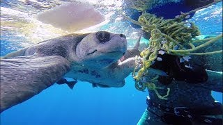 GoPro: Diver Saves Sea Turtle - YouTube