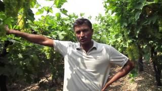 Solapur Vikramsinha gawde