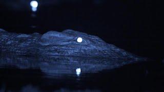 Crocodile - Eyesight