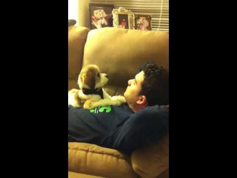 Diskussion mellan hund & ägare
