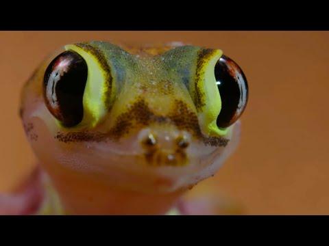 Antlion Cone Death Trap - The Hunt - BBC Earth