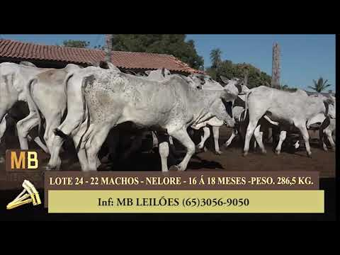 253º LEILÃO VIRTUAL MB LEILÕES