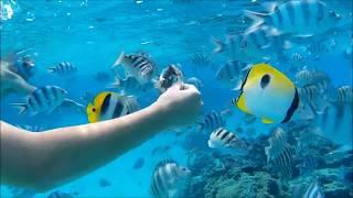 Snorkeling Bora Bora 2 (French Polynesia) 2.