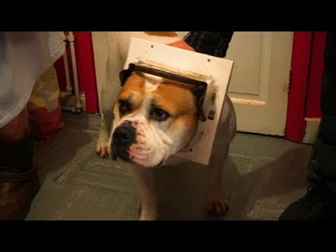 Funny cat videos - Cute Pets  Cute Dogs Doing Funny Things (Part 2) [Funny Pets]