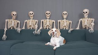 Dog Unimpressed by Skeletons: Funny Dog Maymo by Maymo