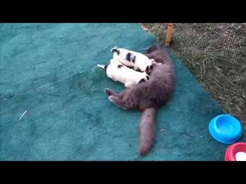 cani e gatta tutti insieme appassionatamente