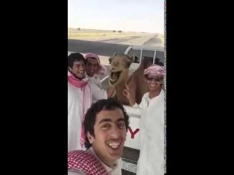Checa cómo este camello se une a la moda de los selfies y hasta sonríe