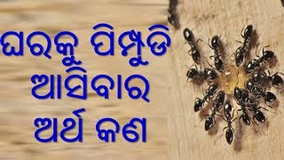 Video Gharaku pimpudi aasiba bhala na kharap download in MP3, 3GP, MP4, WEBM, AVI, FLV January 2017