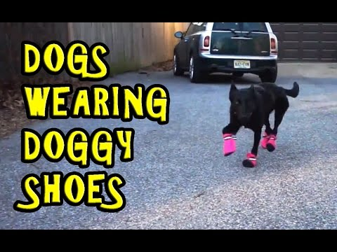 Dogs Wearing Doggy Shoes Compilation 2016 [NEW]