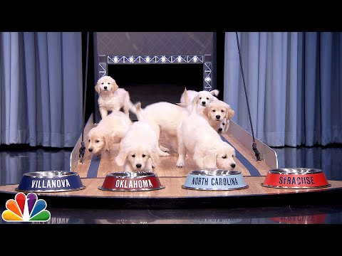 Cute puppies predict the Super Bowl winner