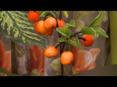 شجرة الزعرور البستاني / قسطبينة ـ ركن تشكيل الورود بالجوارب الصينية / نضرة غوماري / Samira TV