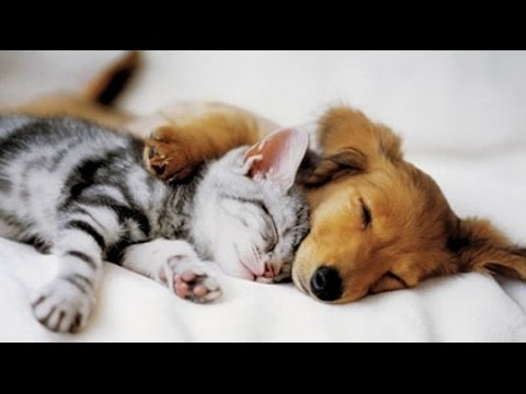 Top 10 Cats And Dogs Best Friends