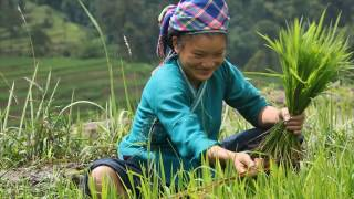 """Temple of Understanding releases documentary on Eco-Sovereignty- """"Roots of Change: Food Soverei"""