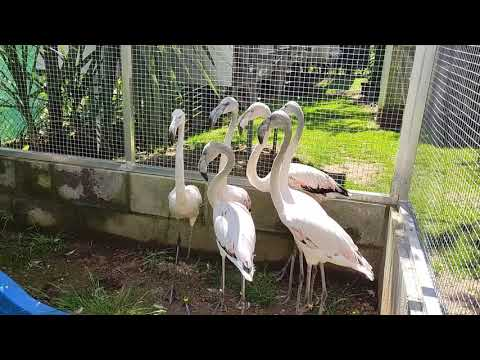 Flamencos en un aviario gallego