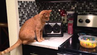 Cat meets toaster