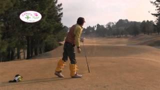 ゴルフ場でサクラ咲くマクラ