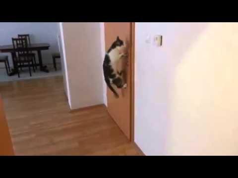 il-gatto-che-apre-5-porte-consecutive-120