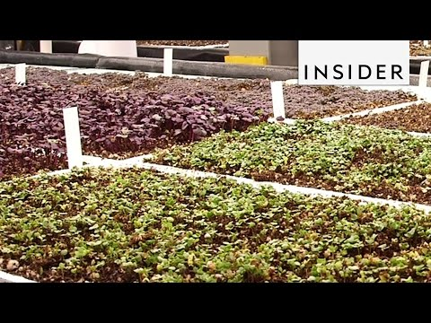This Aquaponic Farm Guarantees the Freshest Food in New York City