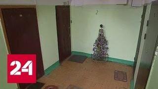 Полиция вернет жильцам украденную из подъезда новогоднюю ёлку