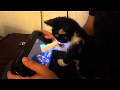 Kitten Loves Super Smash Bros She is the biggest gamer ever, and her favor