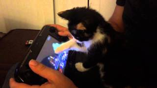 The kitty wants to play Smash Bros too!