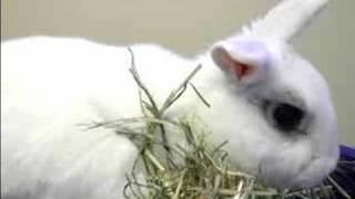 Pet Rabbit Care : Signs Your Pet Rabbit Is Sick