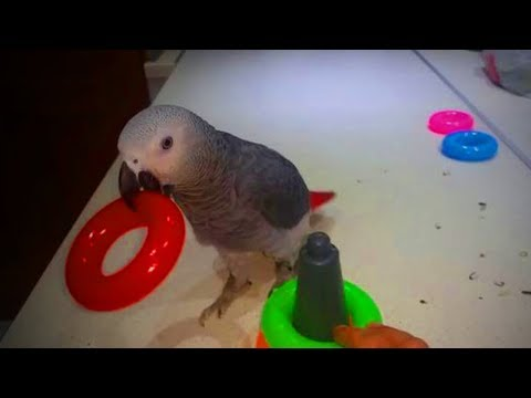 Funny cat videos - Cute Parrots  Amazing Parrots Doing Funny Things (Full) [Funny Pets]