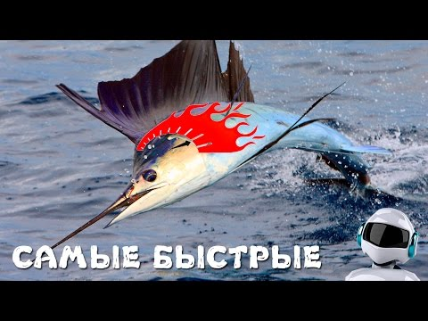 10 самых быстрых рыб в мире