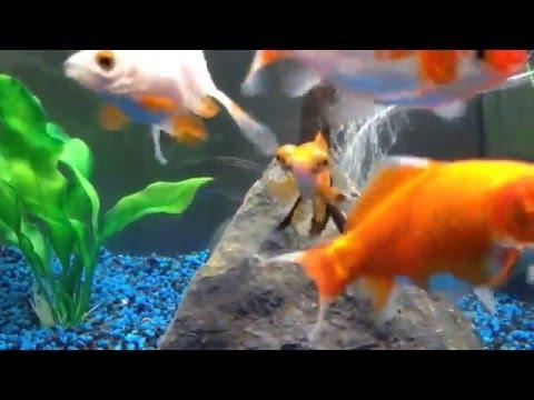 Aquarium noir Aquadream Aquatlantis Modèle 60 LED Contenance 52 litres