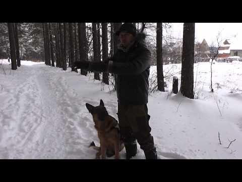 Как стать лидером для собаки за 15 минут