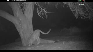 À la quête du guépard saharien : la stupéfiante épopée scientifique | DOCUMENTAIRE