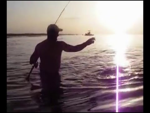 Speckled Trout, Redfish, & Tripletail -Texas Fishing