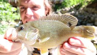 """This was very exciting!!! I love fishing creeks especially when you come across the monster of the creek!!!! Surprise catch make sure you check this out!!!!!!!MUSIC- Spike vibes https://www.youtube.com/channel/UCLY3kskbNAeDl3utrSfccJA/videosLURES I USEStorm Live kicking Minnow-https://goo.gl/CbMb6MMatzuo Ikari lipless crankbait- https://goo.gl/RBPTdyStorm 3"""" Wildeye Bluegill-https://goo.gl/APLKxCDUCK LURE-https://goo.gl/jMYCz1SUNFISH LURE-https://goo.gl/GhTpRcDOUBLE PLOPPER- https://goo.gl/lVmOaUROD AND REELSMACH 1 Speed Spool Combo- https://goo.gl/ibmLGlMACH 2 REEL- https://goo.gl/th3A2yGhost Ducket rod- https://goo.gl/G0upkPUgly Stick Combo- https://goo.gl/1kLk7mCamera GearGo Pro Hero 5- https://goo.gl/eUnDgcCannon 70 D with lens- https://goo.gl/hxAeuu*above are amazon associate links*"""