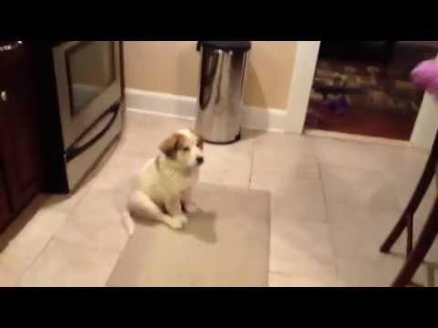 Hundvalp med lite svårigheter