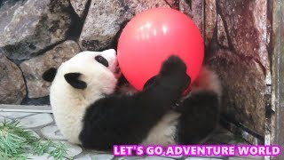 アドベンチャーワールドへGO!! ~LET'S ENJOY ADVENTURE WORLD Giant Panda Yuihin~